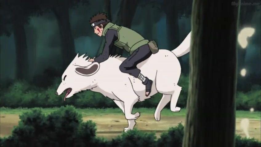 Naruto episode 313 online / Lost girl season 3 hail hale